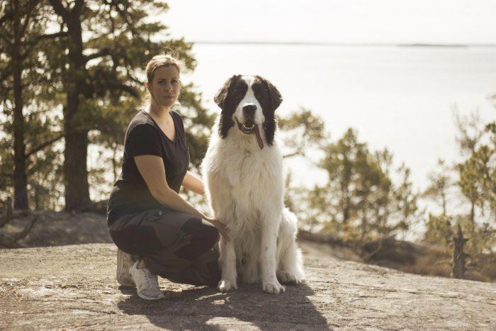 hundenshark_amazingdogshark_landseer_amazingdog