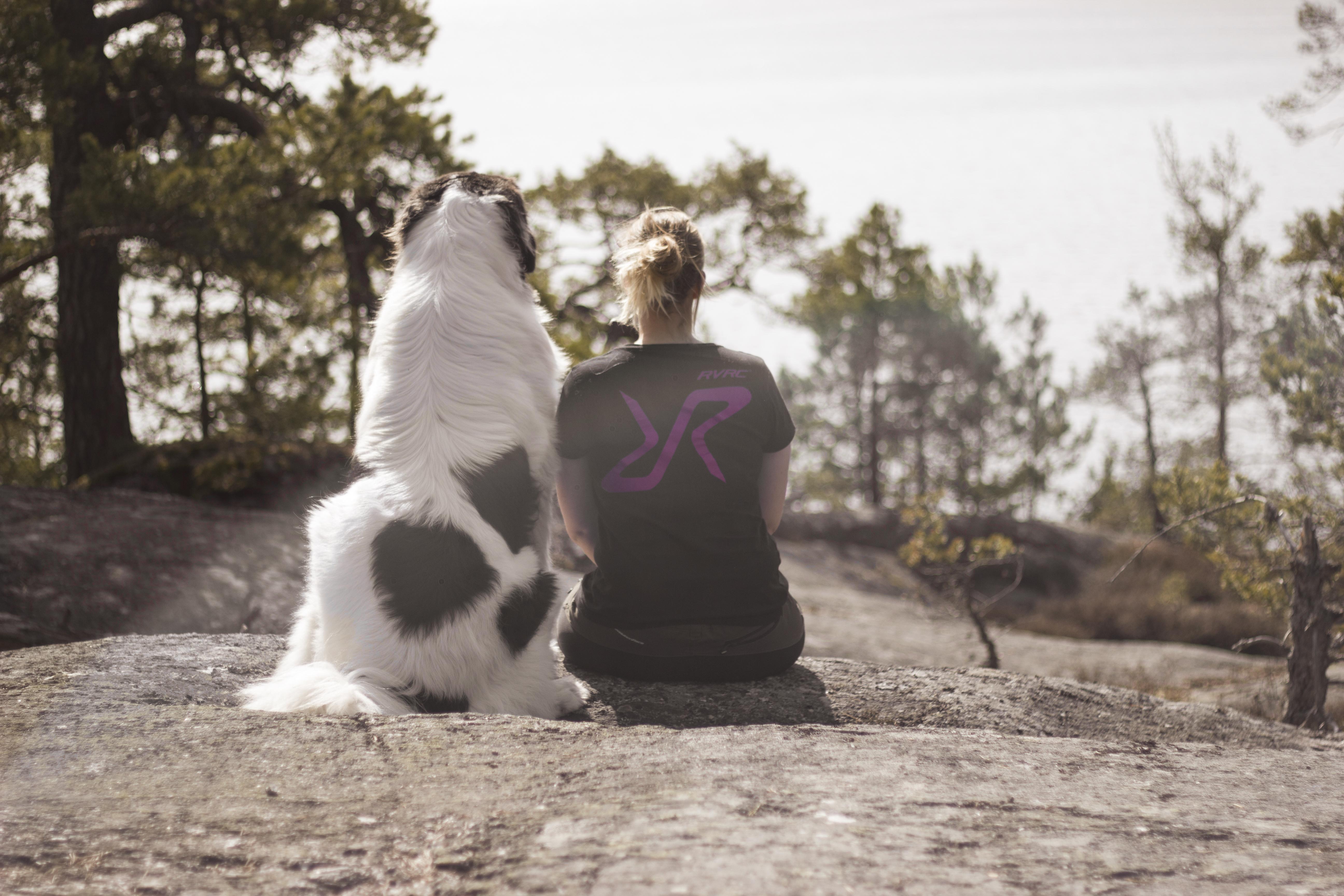 hundenshark_amazingdogshark_landseer_amazingdog1